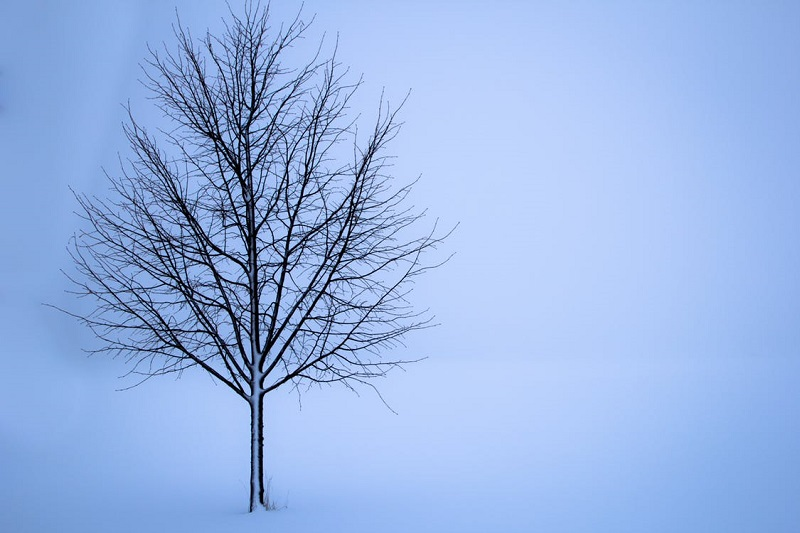 tree-snow-winter-landscape