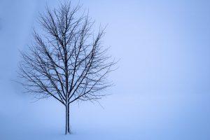 tree-snow-winter-landscape