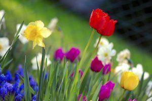 Colorful Spring Garden, wikimedia